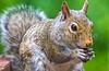 Backyard animals - May 2014-0040 - 72 ppi
