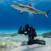 The shark photographer - Tiger Beach, Bahamas 2021