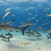 Sharkscape - Tiger Beach, Bahamas 2021