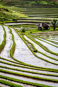 Rice Terraces Planting season