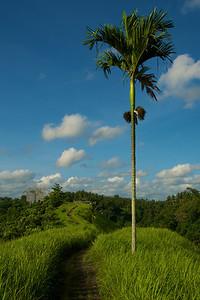 Bali 070