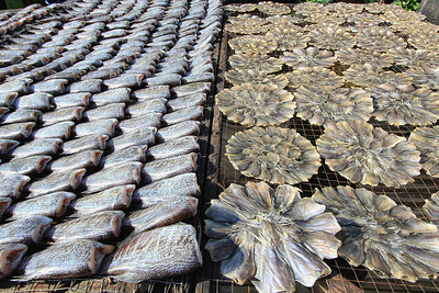 Dried Fish #1, Bangkok