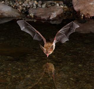 Bats I Love