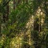 Muir Woods II - Marine, CA