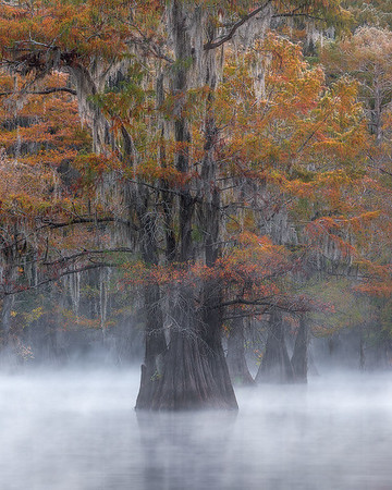 """""""Autumn in The South """"  (2017)"""