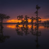 """Evening on the Bayou""    (2016)"