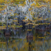 """""""Autumn Reflections and The Blue Heron""""  (2017)"""