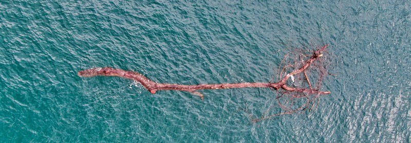 Floating tree in the blue ocean - log in the water - Costa Rica