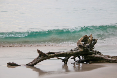 Log at tthe beach with a wave in the background