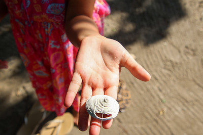 Seashells in childrens hand at the beach
