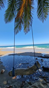 Swing at the beach with palm trees and blue water