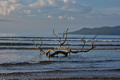 Driftwood in the ocean