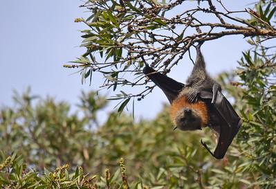 Aerial Acro-Bat