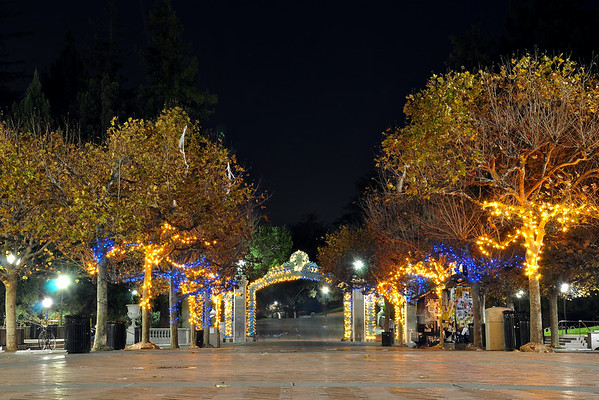 Blue & Gold Sather Gate Trees