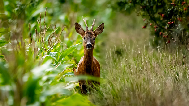 """The moment of """"stand off"""" with Roe Buck"""
