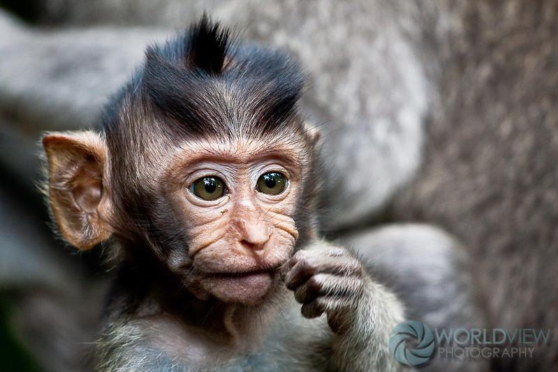 Sacred Monkey Forrest, Ubud, Bali