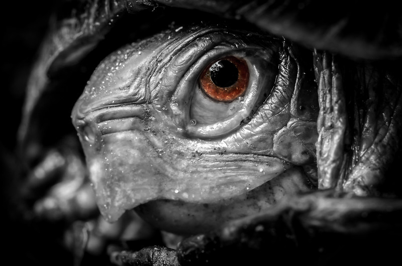 Eye of the Turtle