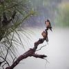 Bill Dahl - Stnkin' Rain (Forest Gump)