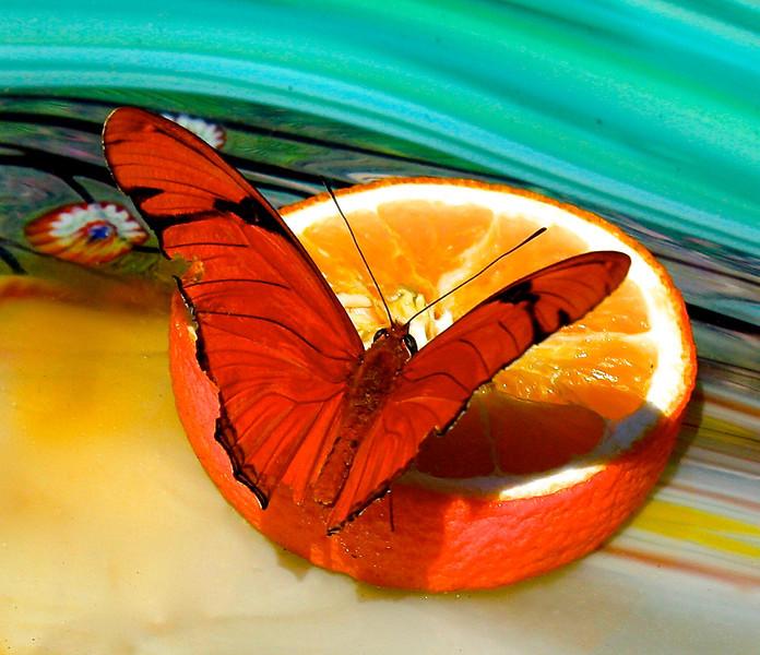 Citrus Snack