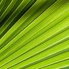 John Murphy - Palm Leaf