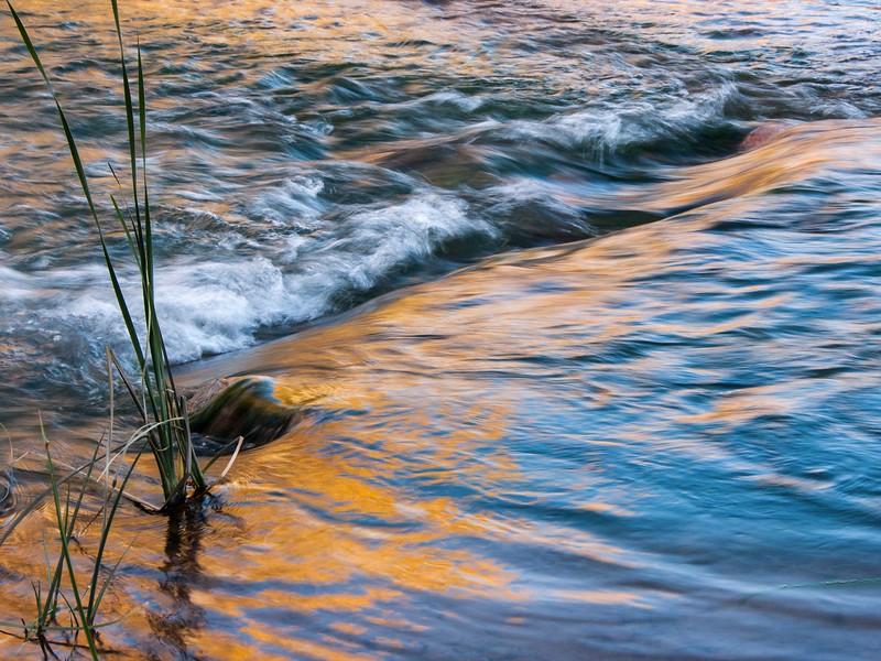 John Murphy - Reeds and Golden Reflection