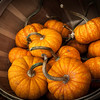 Basket of Mini Pumpkins