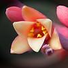Steve Moody - Red Yucca Bloom