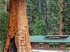 sequoia parents-9235