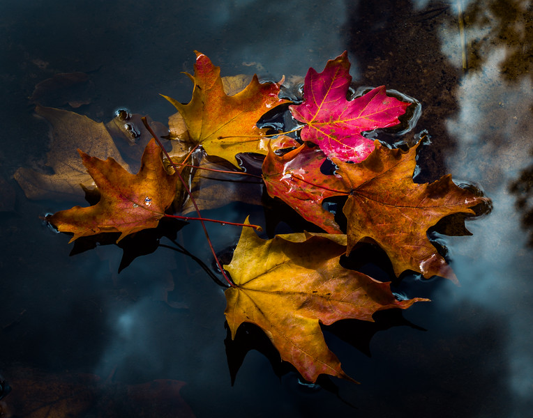 Autumn Leaves on Oak Creek