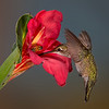 Sharing a Canna Lilly - Eric Gofreed