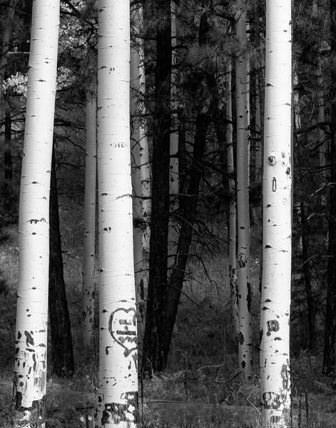 White Trunks