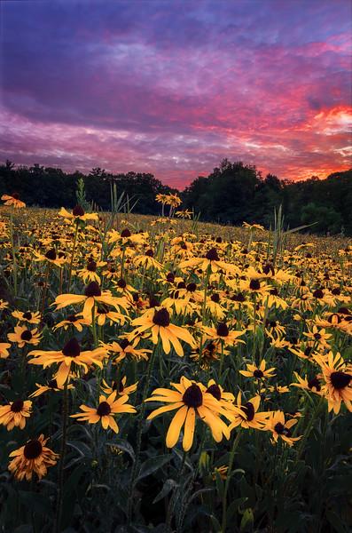 Wildflowers Under a Fiery Sky