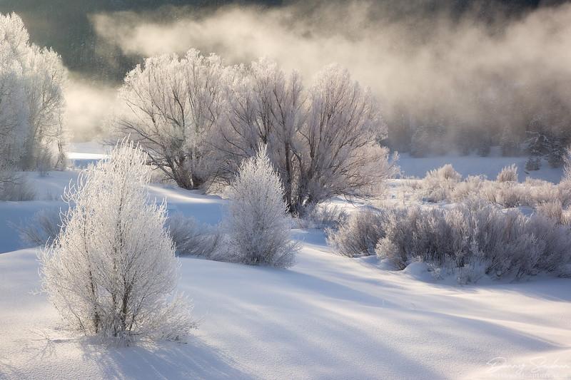 Frozen Silence