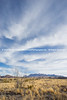 Ocotillo and Big Sky