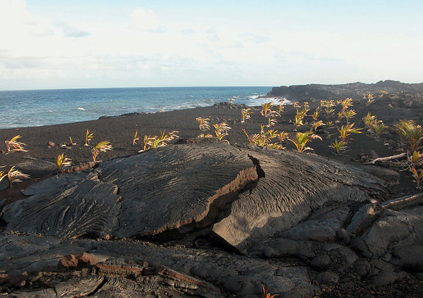 Pahoehoe lava, fragmented during the 1990 flow - along the hike to New Kaimu Black Sand Beach - Puna district