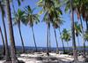 Coconut Palms at Pu'uhonua (Place of Refuge) - across the mouth of Honaunau Bay - Kona district