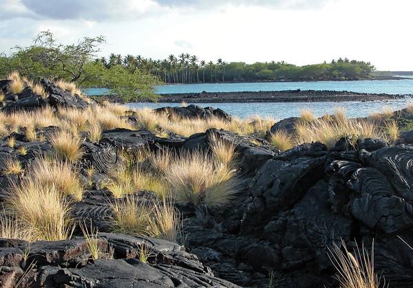 Kiholo Bay - lava from the1859 flow, from the Mauna Loa Volcano - Kohala district