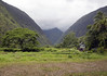 Up the Waipio Valley - where a few dozen people live without electricity - Kohala district