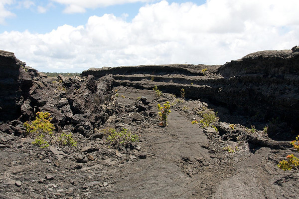 Along the Napau Crater Trail - the Manau Ulu Shield (northern flank) - Upper East Rift - Hawaii Volcanoes National Park