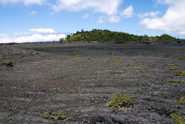 Pu'u Huluhulu (shaggy hill) - the vegetation growth was spared from the devastation of Mauna Ulu lava flow - Hawaii Volcanoes National Park - Mauna Loa in distal background