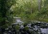 Quick shower upon the Waipi'o Stream - Waipi'o Valley - Kohala district