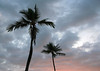 Sunset glow upon the cumulus clouds - and the Coconut Palms - Big Island Hawai'i