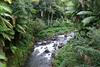"Kawainui Stream - near the village of Pepeekeo - Hanakua district - and the zoological wonder of the Hawaiian Islands, is that you can trek anywhere without the concern of ""snakes"", for not even a non-venoumous, is found on any island"