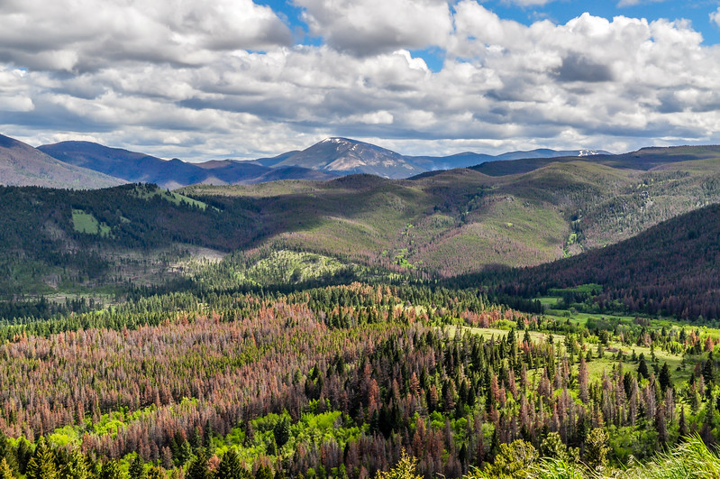 Forests & Mountains in Montana
