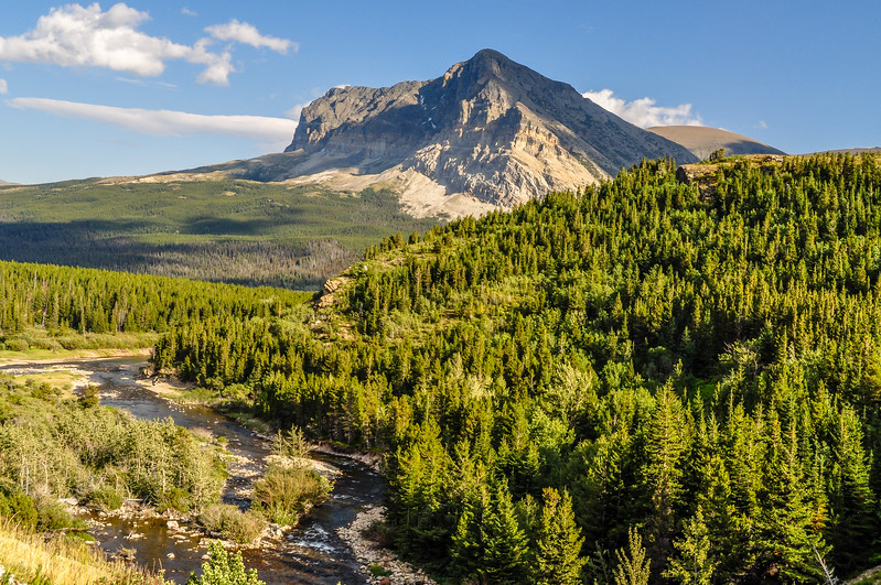 Pine Tree Forests & Rocky Mountain Tops