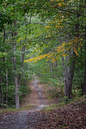 Bow Ridge Trail