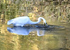 "<div class=""jaDesc""> <h4> Great Egret Retrieves Fish</h4> <p> </p> </div>"