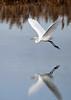 """<div class=""""jaDesc""""> <h4> Great White Egret """"V"""" Wings</h4> <p> </p> </div>"""