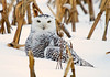 "<div class=""jaDesc""> <h4> Hi, I know I look like Harry Potter's Hedwig </h4> </div>"
