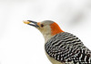 "<div class=""jaDesc""> <h4>Female Red-bellied Woodpecker with Peanut</h4> <p></p> </div>"